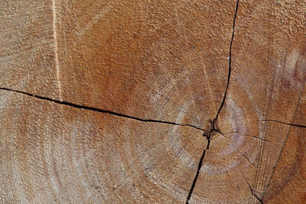 Как лучше заделать отверстие в дереве: рекомендации и фото