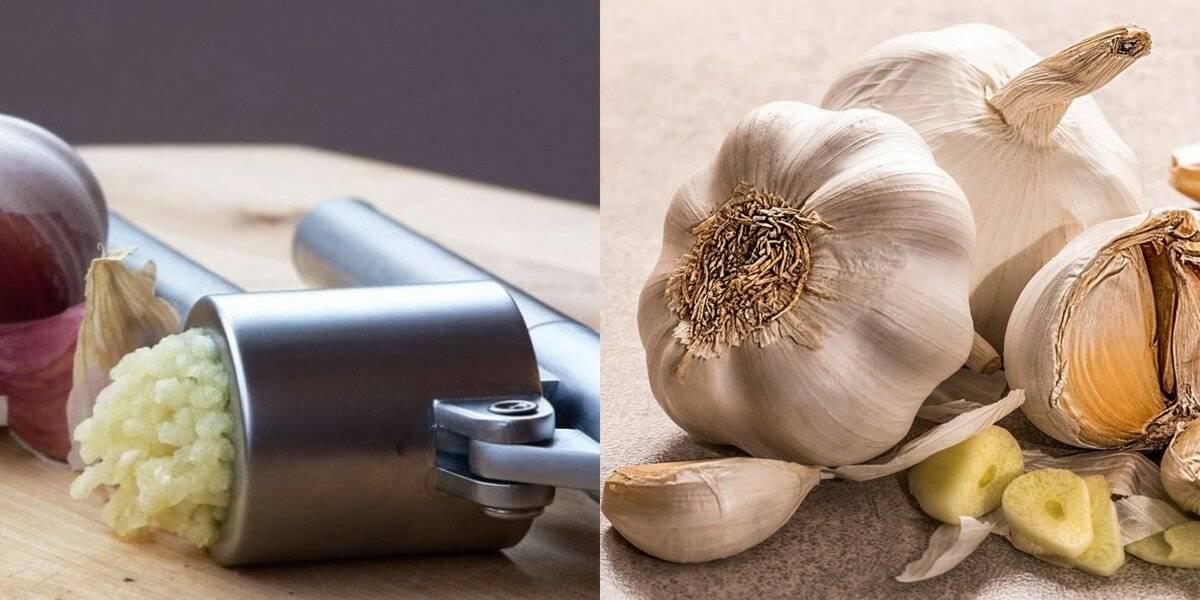 Лечение чесноком. применение чеснока в народной медицине