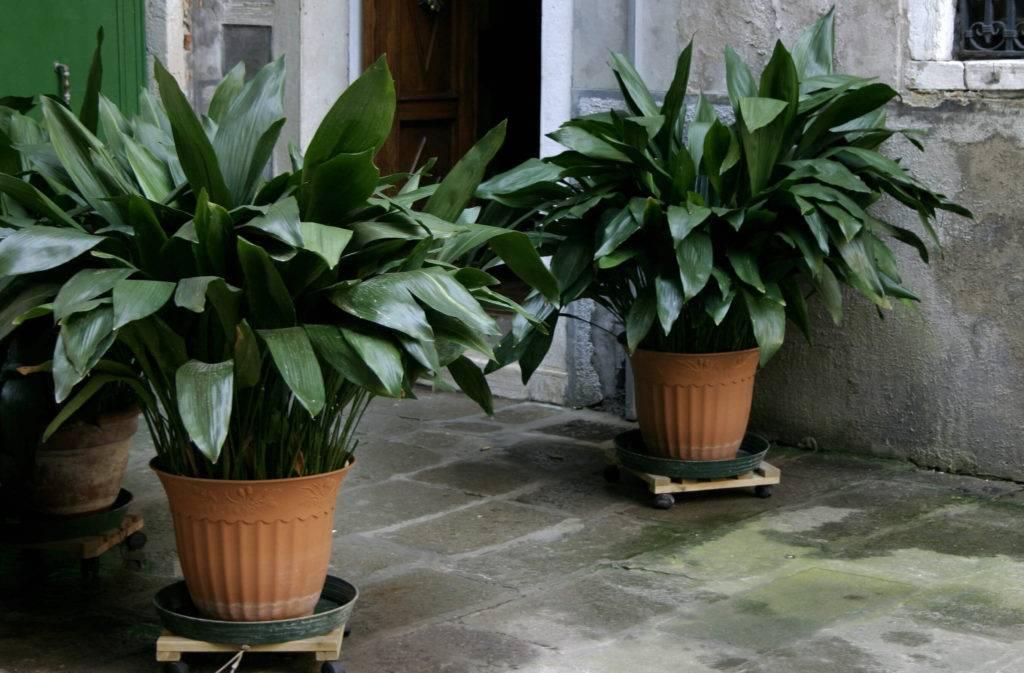 Какие комнатные растения лучше выбрать в темном помещении
