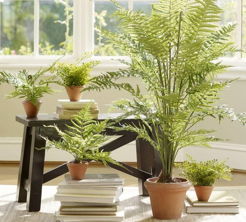 Тенелюбивые комнатные растения- список названий с фото