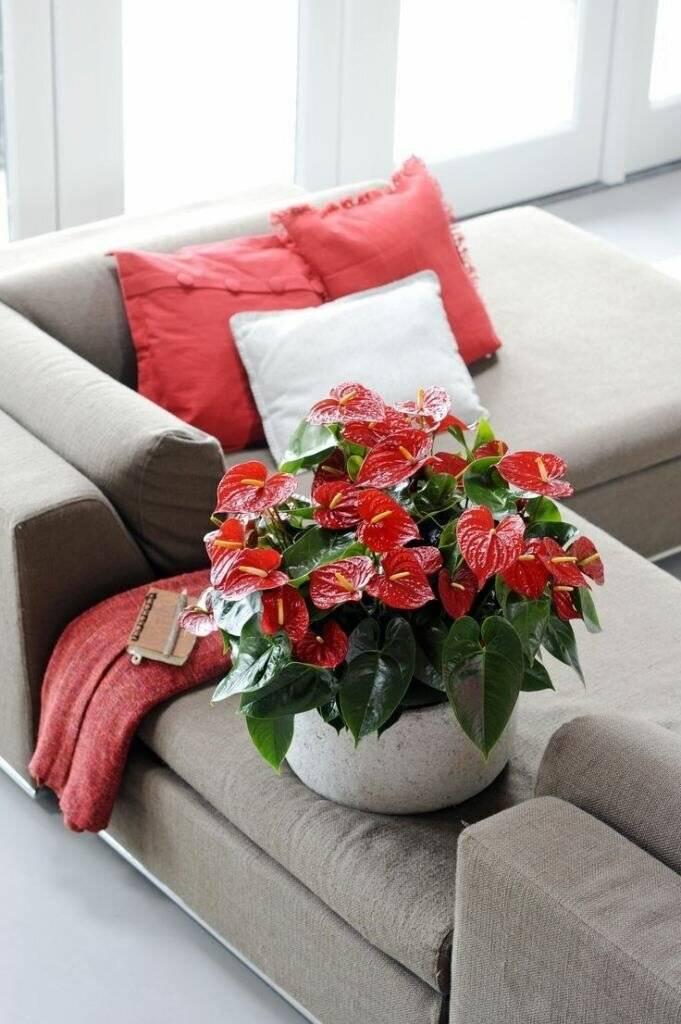 Популярные комнатные цветы и их названия