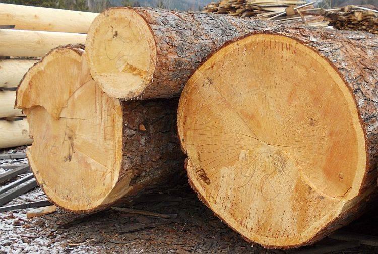 Какое дерево лучше для бани: плюсы и минусы липы, дуба, лиственницы, из какого леса лучше строить, строительство, из какого дерева делают сруб, фото и видео
