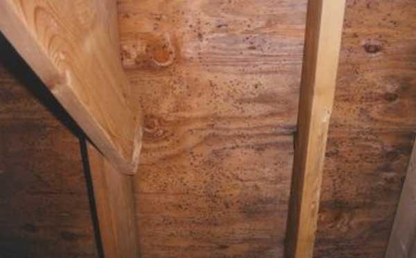Грибок под деревянным полом – как избавиться раз и навсегда