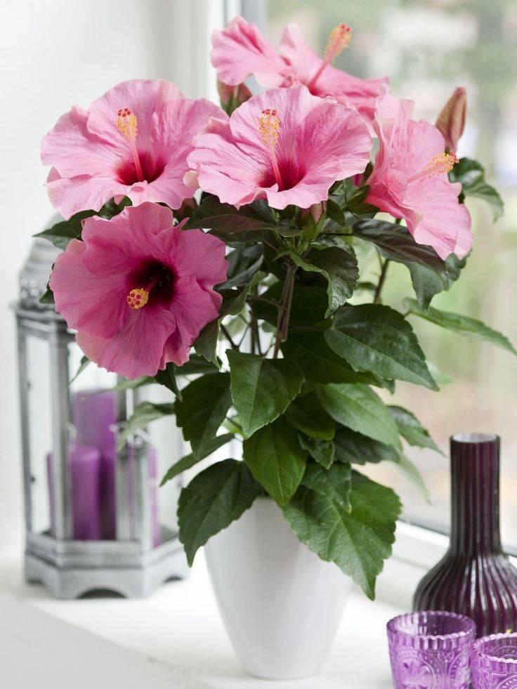 Топ-15 лучших комнатных растений для гостиной