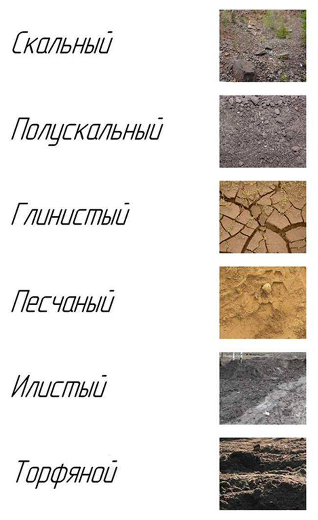 Как узнать тип почвы на участке? как определить тип почвы в огороде и на садовом участке? как понять состав? определение кислотности в домашних условиях