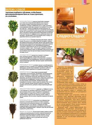 Пихтовый веник для бани: польза и вред, как правильно заварить, подготовить, когда заготавливают, как вязать, хранить, видео, фото