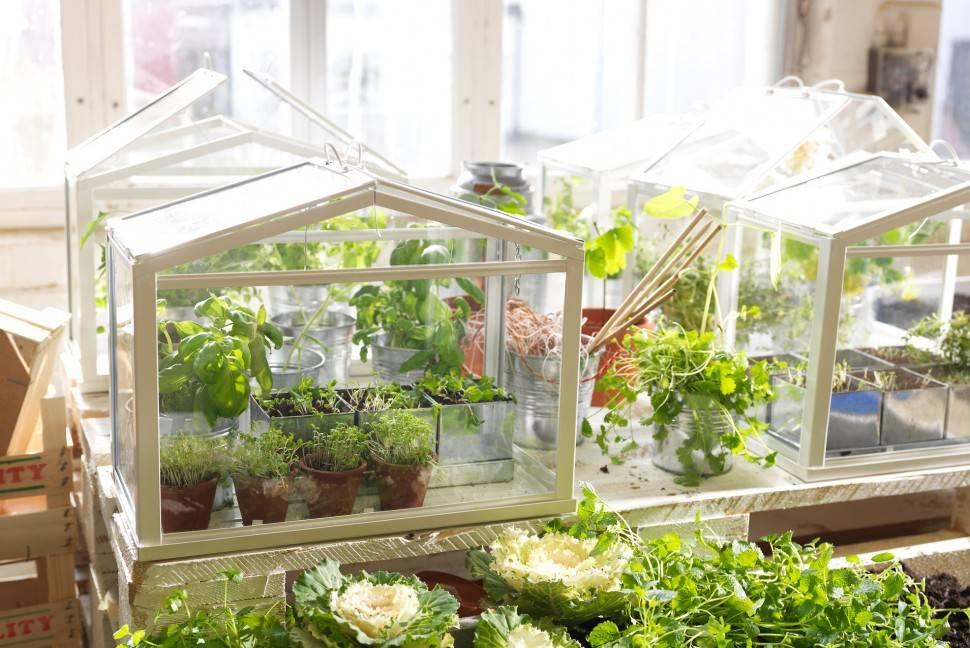 Дачная теплица (55 фото): маленькие «эко» варианты для дачи и сада, нужно ли регистрировать небольшие конструкции на участке