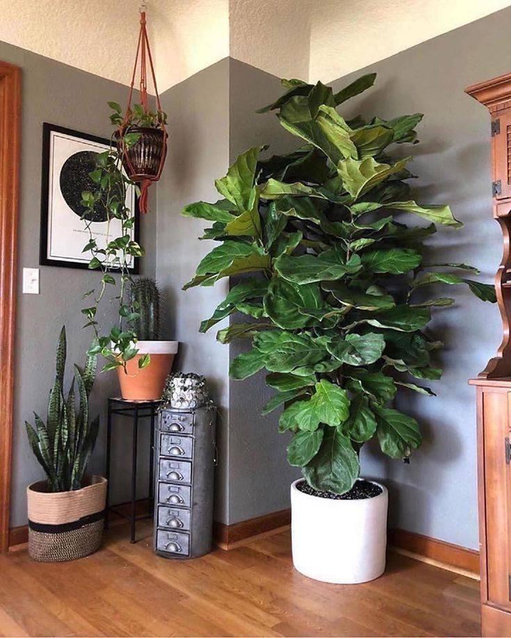 Растения для темных помещений