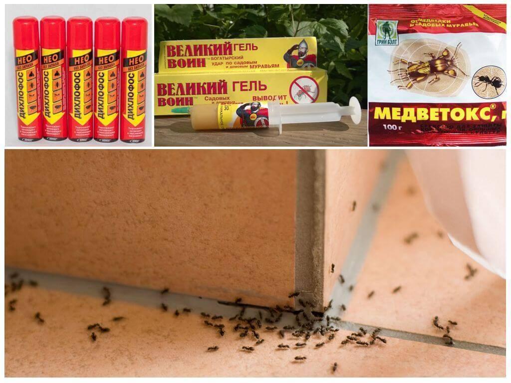 Как избавиться от муравьев в бревенчатой бане: чем их травить, обзор популярных средств