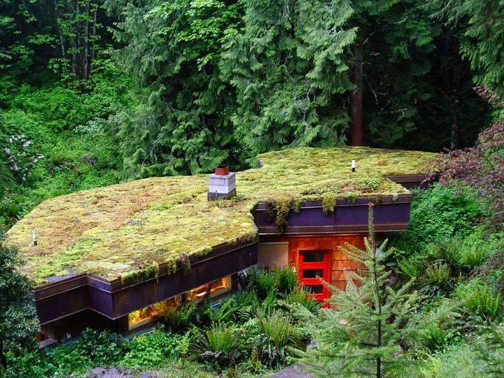 Озеленение крыш домов, зданий – технологии и особенности