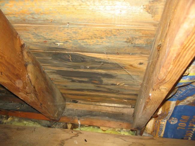 Как избавиться от грибка в подполье - устраняем всю плесень