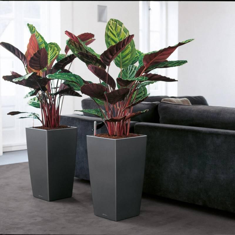 Тенелюбивые комнатные растения: название, описание и фото неприхотливых цветов, которые любят тень