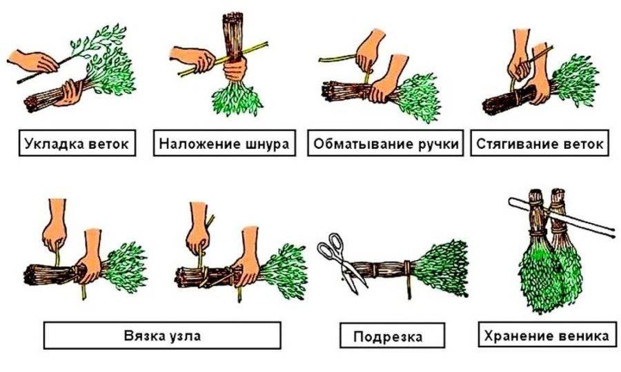 Как делать веники для бани - все самое важное: когда и как заготавливать, как правильно срезать и связать