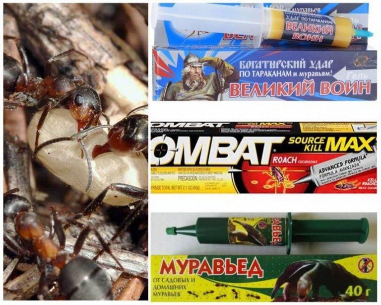 Как избавиться от муравьев в бане: чем можно вывести, народные средства