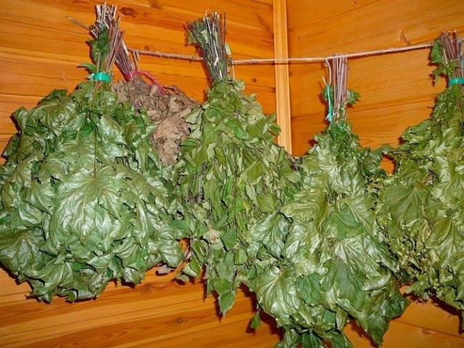 Пихтовый веник для бани: польза для здоровья