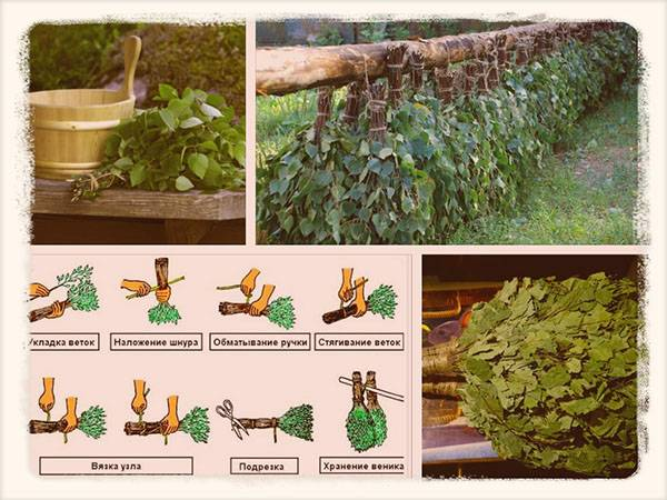 Как сушить веники для бани и хранить: как делать веник из березы, дуба и правильно запарить можжевеловый | domovoda.club