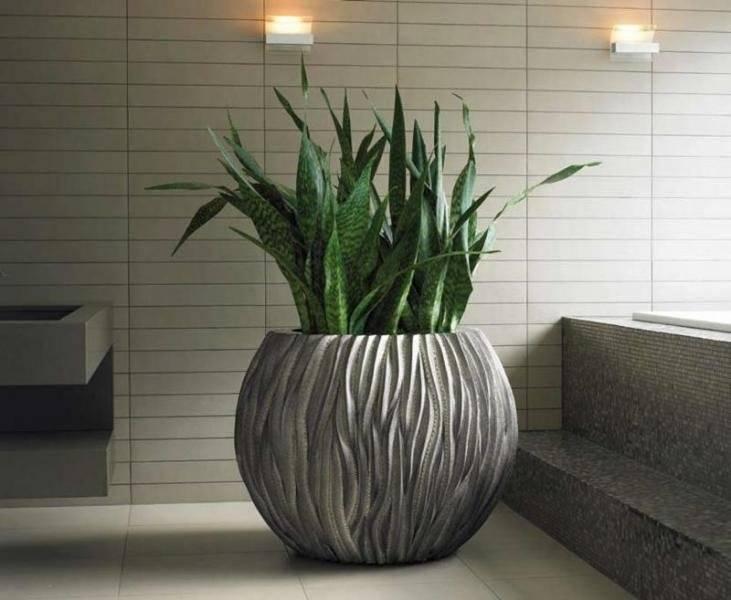 Топ-10 самых теневыносливых комнатных растений