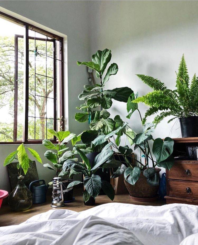 Особенности выбора и размещения растений в интерьере жилого дома