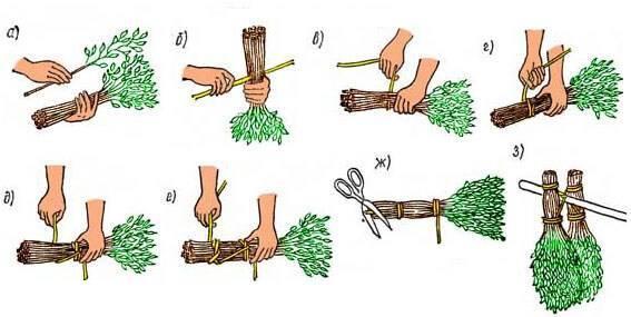 Как запарить пихтовый веник для бани правильно, польза пихты, как запаривать, когда заготавливают, фото и видео