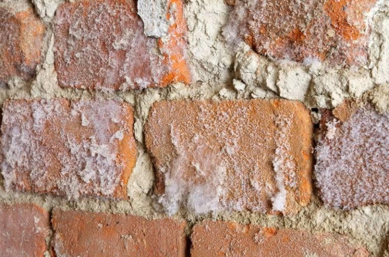 Высолы: что это такое, причины появления на бетоне, плитке, штукатурке, дереве и другой поверхности, как удалить народными и другими средствами