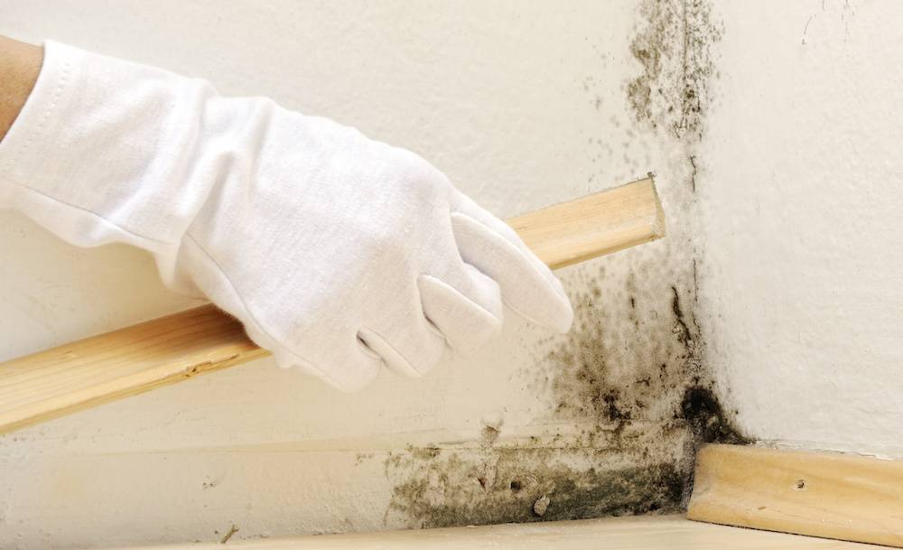 Как избавиться от плесени и грибка на полу под линолеумом, чем просушить после затопления