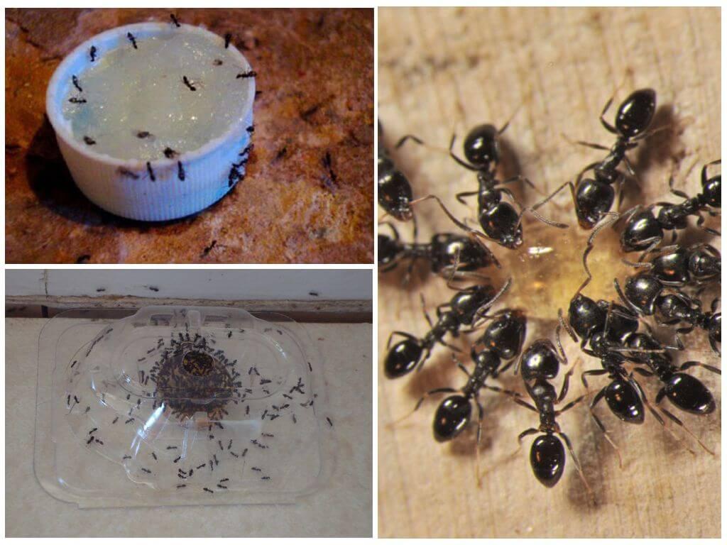 Выводим муравьев из бани народными и другими средствами