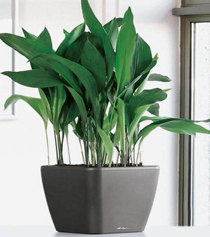 Неприхотливые тенелюбивые комнатные растения: названия и фото