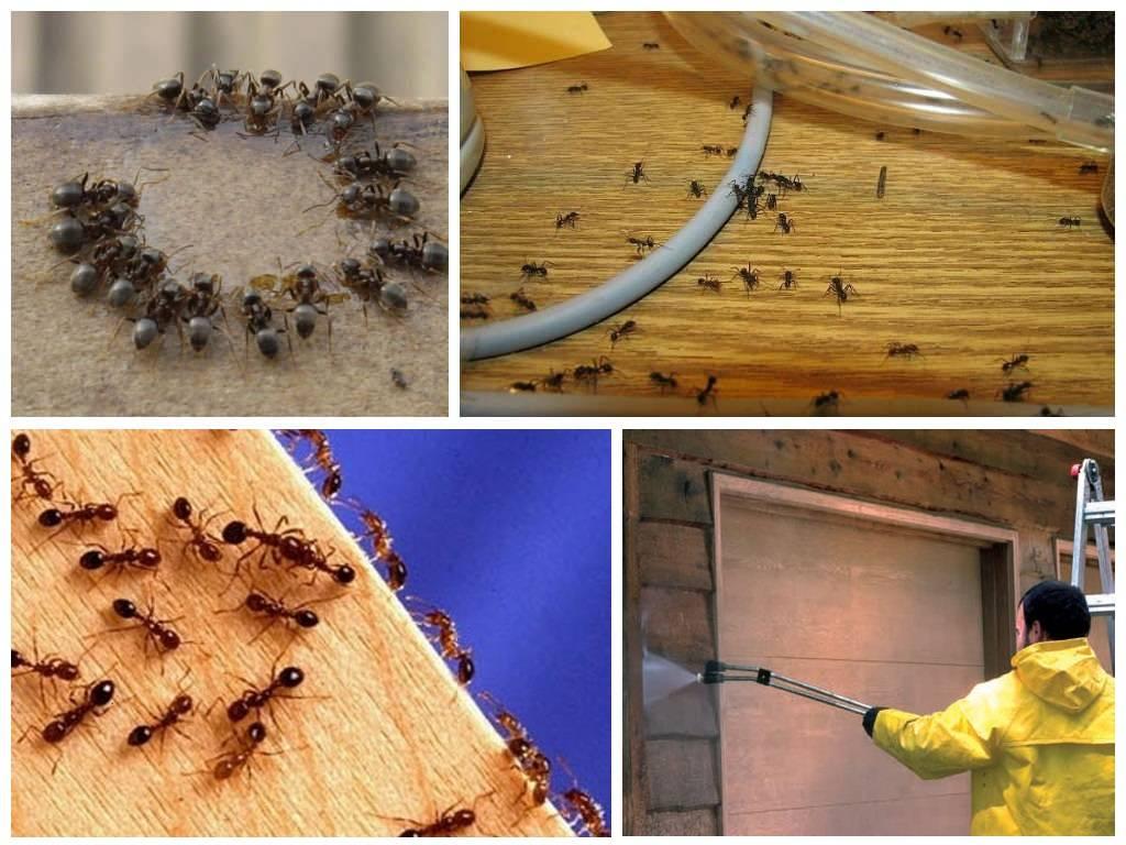 Как можно избавиться от муравьев в бане?