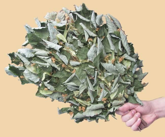 Кленовый веник для бани: польза и вред