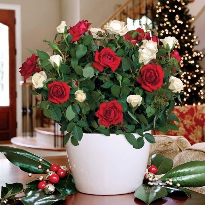 Топ-10 самых красивых цветов в мире: фото, названия