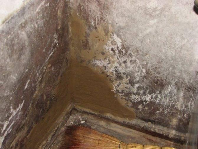 Плесень под линолеумом — как высушить пол после потопа?