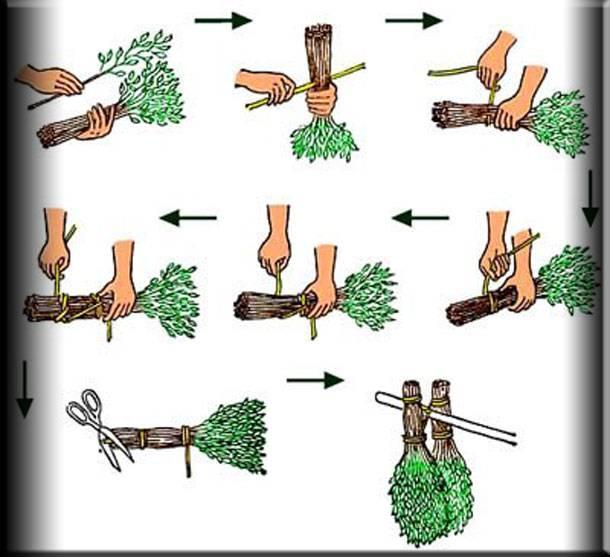 Когда заготавливать банные веники и как вязать их, как правильно это делать