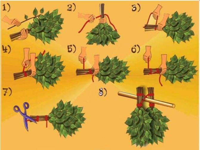 Липовый веник для бани: польза и вред, когда заготавливать