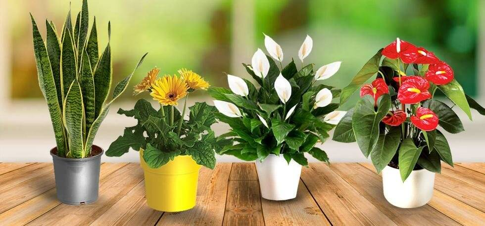 Комнатные цветы - фото и названия, каталог лучших комнатных растений