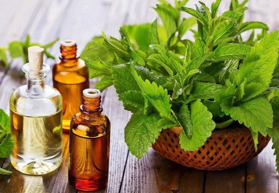 Эфирные масла для бани: лучший обзор 19 видов и их свойства