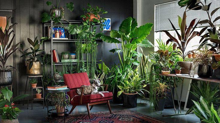 Комнатные растения для темных помещений: неприхотливые растения для темных комнат