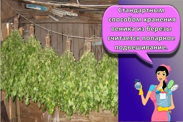 Как сушить веники для бани / vantazer.ru – информационный портал о ремонте, отделке и обустройстве ванных комнат
