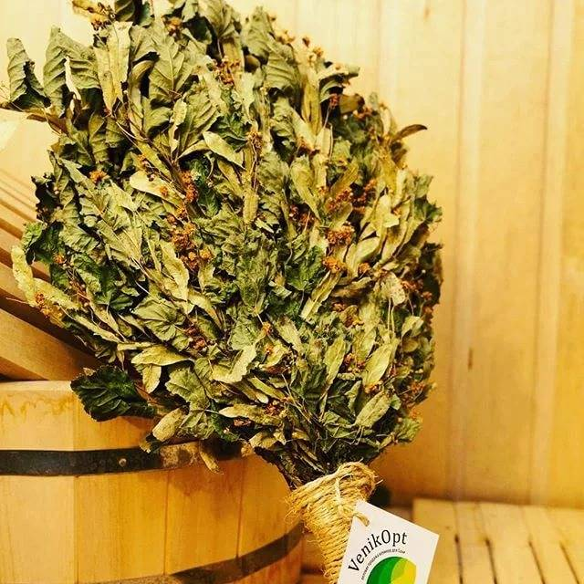Самые полезные и ароматные веники для бани