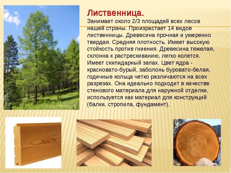 На баню надейся, а сам не плошай — выбираем древесину для строительства бани