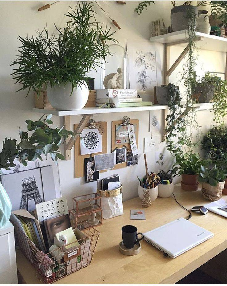 Растения в интерьере квартиры
