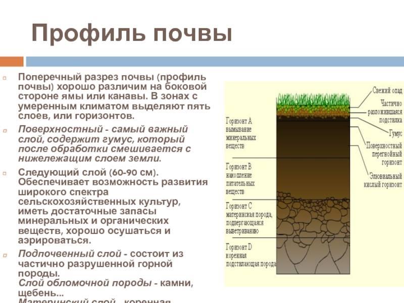 Анализ грунта под фундамент: как произвести оценку самостоятельно