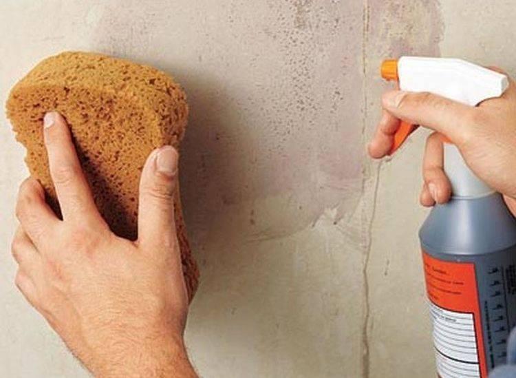 Моющаяся краска для стен: характеристики, виды и особенности