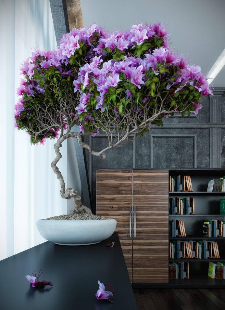 Домашние растения — самые красивые и популярные (50 фото)