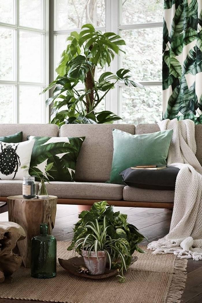 Комнатные растения в интерьере квартиры и дома с фото