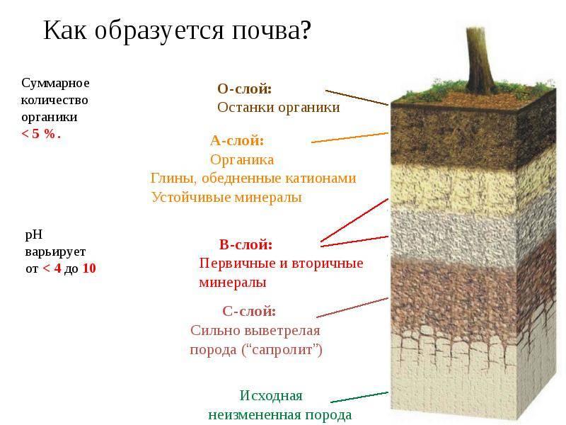 Как узнать какая почва на участке?
