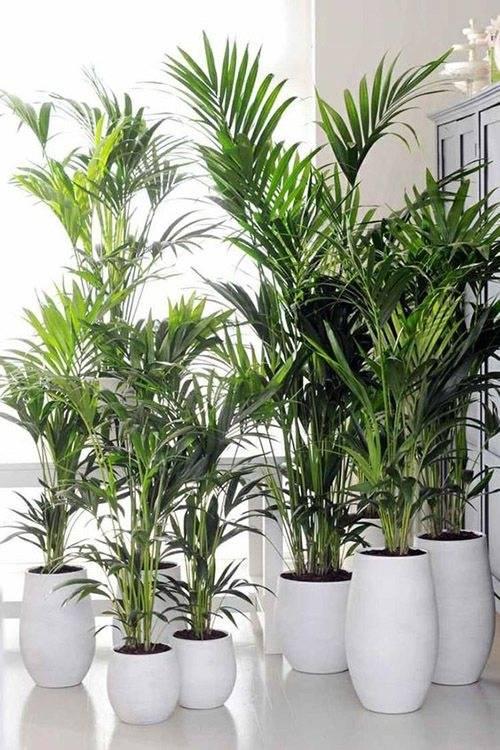 22 самых тенелюбивых комнатных растения (названия и фото)