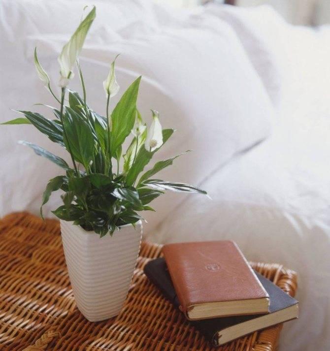 Тенелюбивые и теневыносливые комнатные растения