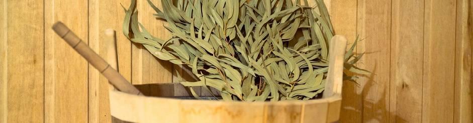 Эвкалиптовый веник для бани: лечебные свойства банного атрибута