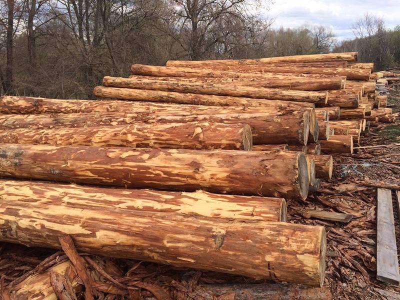 С чего строить баню? из какого материала и какой породы лучше всего построить, как начать из дерева, как начинать постройку из древесины