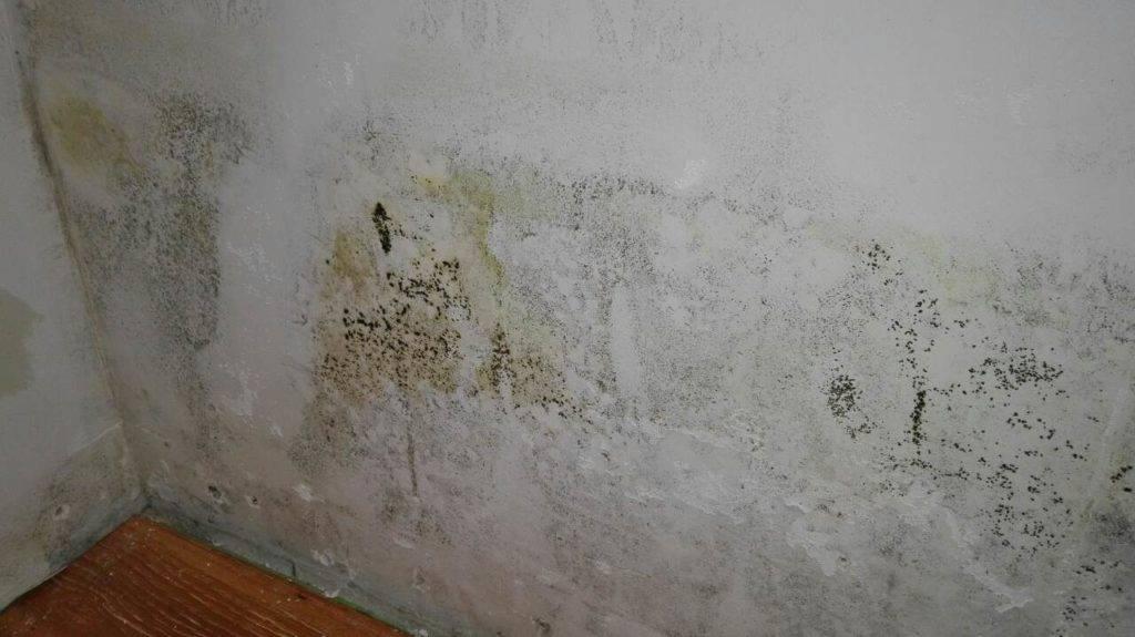 Грибок в подполье деревянного дома - избавляемся раз и навсегда - самстрой - строительство, дизайн, архитектура.